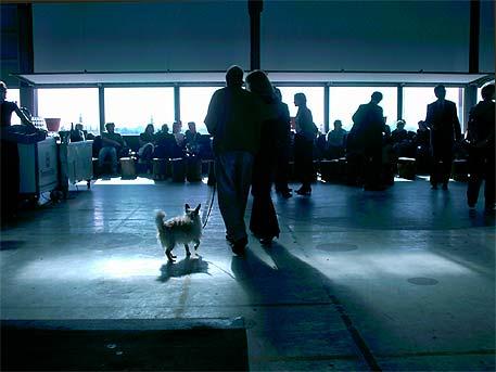 Het hondje van Constant met baas en bazin bij de opening van Stedelijk Museum CS