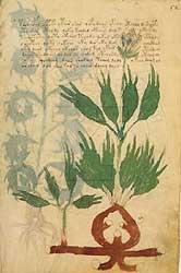 een pagina uit het 'Voynich manuscript'